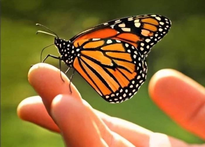 metamorfica mano mariposa